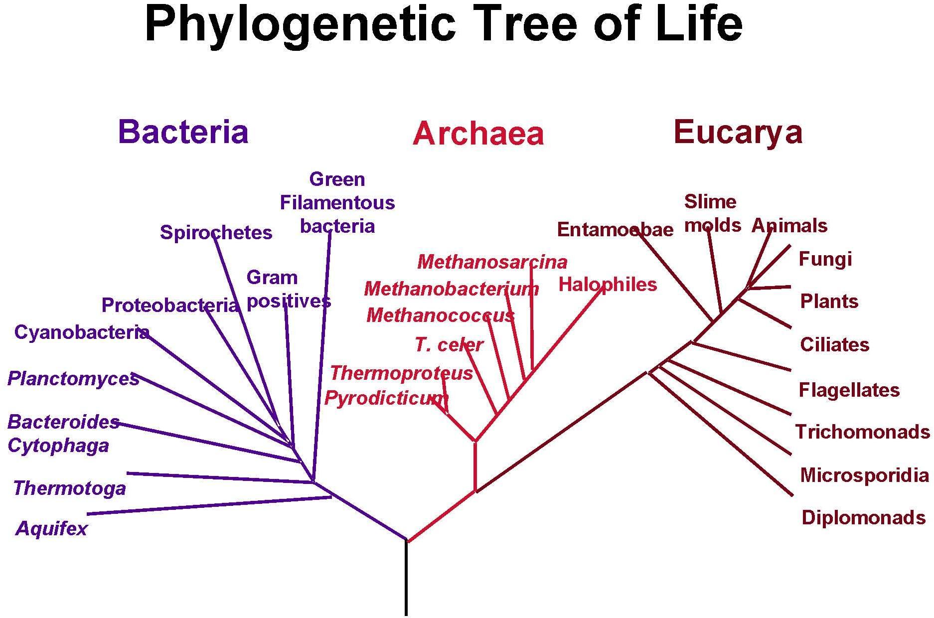 Biology pooptronica Choice Image